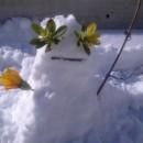 Snješko Komarnić