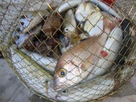 Ribarska
