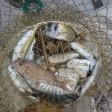 Dozvole za ribolov